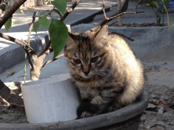 Cat chilling in a pot
