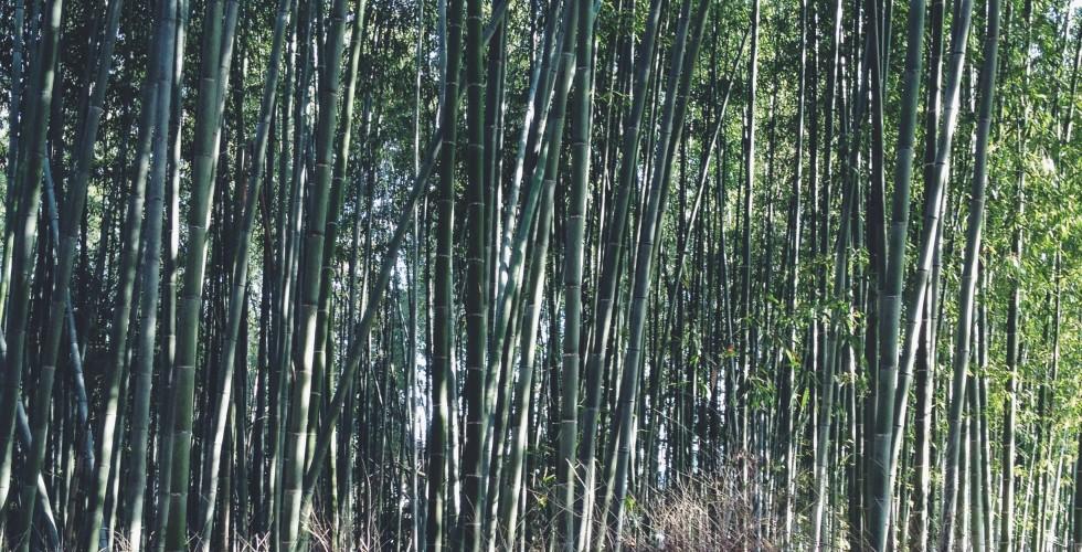 Arashiyama: Bamboo Grove
